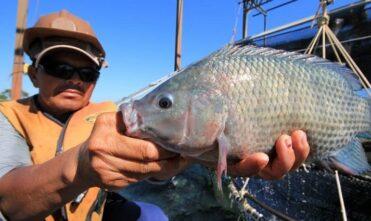 Conselho aprova programa estadual de apoio e fortalecimento da piscicultura
