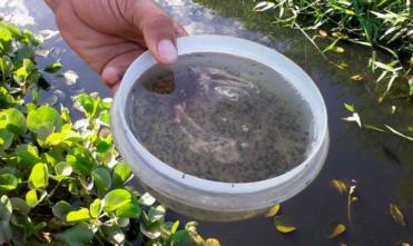 Aedes Aegypti: Estado destina novos equipamentos de borrifação aos municípios
