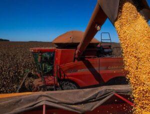 Preço do milho sobe 28% em outubro e bate recorde no Brasil