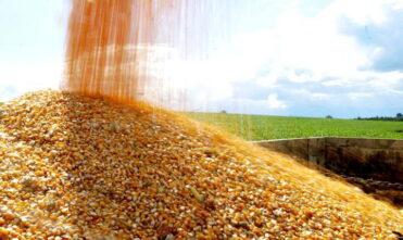 SAIBA o que pode fazer o milho subir ainda mais