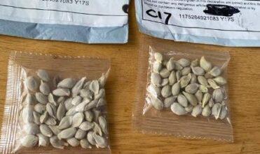 Quais são as pragas que escondem as sementes da China