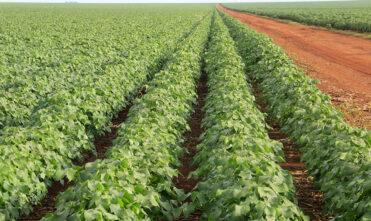 Valor da Produção Agropecuária de 2020 soma mais de R$ 871 bi e é o maior da história