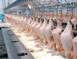 Rússia deve reduzir impostos sobre importações de aves do Brasil