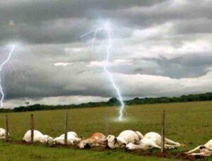 MS é o 3º com maior número de gado morto por raios e prejuízo chega a R$ 1,8 milhão